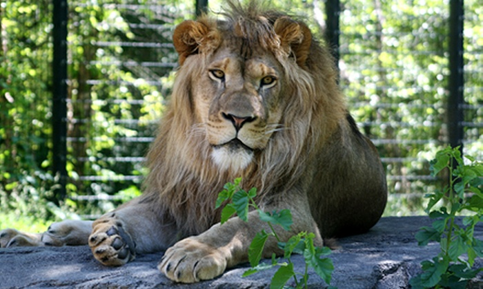 Blank Park Zoo - Des Moines: Visit for Two or Four Adults, or Two Adults and Two Children at Blank Park Zoo (Up to 41% Off)