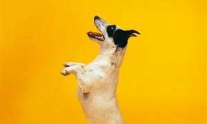 LEAL CAN: Curso de 1 mes de disciplina Agility o habilidades caninas desde 24,95 €