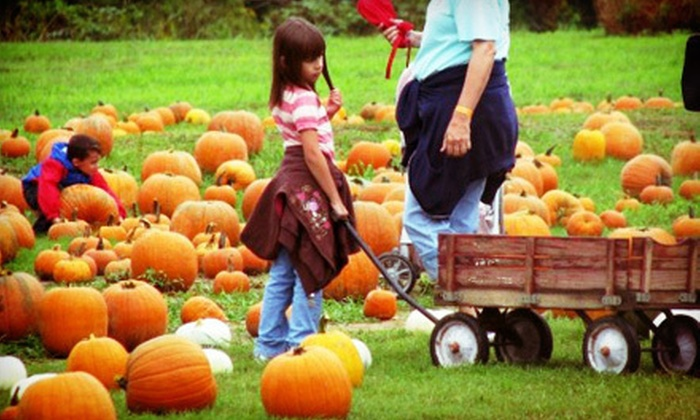 Mitchell Farms - 5: Maze, Pumpkin Patch, and Autumn Activities for Two, Four, or Six at Mitchell Farms (Half Off)