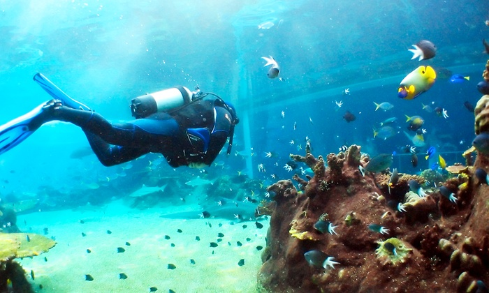 Mondo Sub - Buccinasco (MI): Corso di sub PADI Scuba Diver a 49,90 €