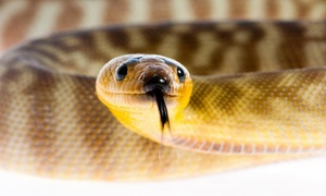Scales and Tails Utah: Reptile- and Insect-Zoo Visit for Two or Five at Scales and Tails Utah (Up to 50% Off)