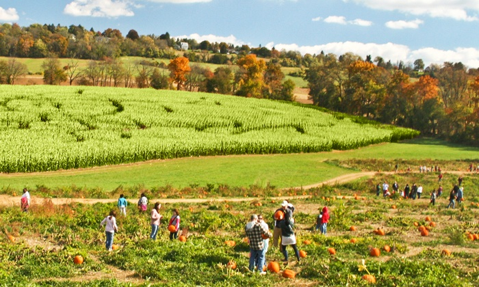 Jumbo's Pumpkin Patch - Middletown: Corn-Maze Admission for Two or Four on Friday, Saturday, or Sunday at Jumbo's Pumpkin Patch (Up to 50% Off)