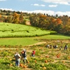 Up to 50% Off Corn-Maze Outings