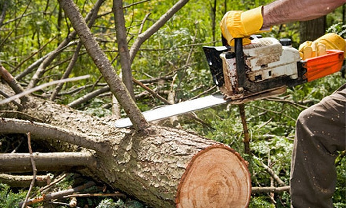 Austin Tree Pros - Austin: $75 for $225 Worth of Tree and Lawn Services from Austin Tree Pros