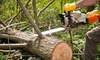 Austin Tree Pros (dba A Reyes Tree Service): $75 for $225 Worth of Tree and Lawn Services from Austin Tree Pros