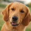 Up to 55% Off 1, 3 or 5 Days of Doggy Day Care