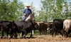 This Is The Place Heritage Park - This Is The Place Heritage Park: 60-Minute Horseback Cattle or Trail Ride for 2, 4, or 6 from This Is The Place Heritage Park (Up to 45% Off)
