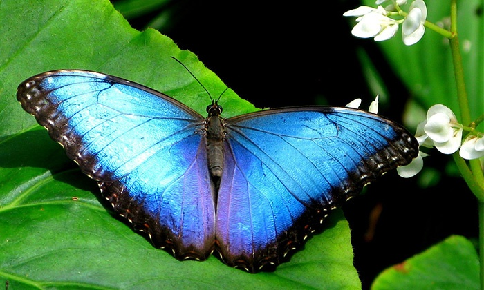 Fort Worth Botanic Garden - Fort Worth: Two Tickets to the Butterfly Exhibit at Fort Worth Botanic Garden (Up to 40% Off). Two Date Ranges Available.