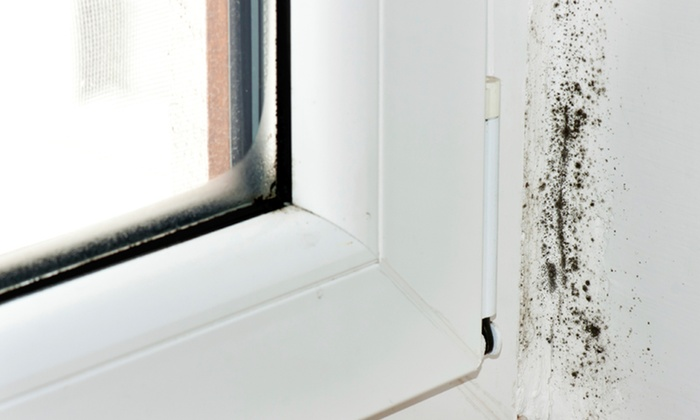 Hurricane Restoration - Palm Beach: $59 for a Mold Inspection from Hurricane Restoration ($125 Value)