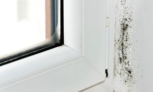 Milano Color: Trattamento antimuffa per pareti e cappotto da Milano Color (sconto fino a 77%)