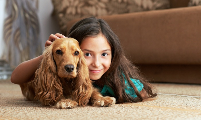 Mr. Cleans Carpets & Upholstery Cleaning - Washington DC: $68 for $150 Worth of Rug and Carpet Cleaning — Mr. Clean's Carpets & Upholstery Cleaning