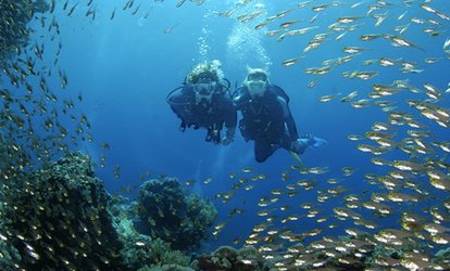 image for Discover Scuba Diving Session For One (£14.50) or Two (£28) People at London School of Diving (Up to 44% Off)