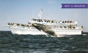 Cape Ann Whale Watch:  $29 for a Whale-Watching Cruise from Cape Ann Whale Watch (Up to $48 Value)