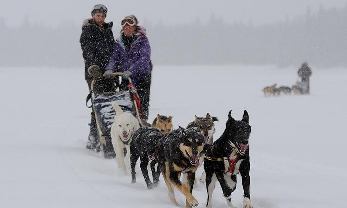 Expédition Hautes-Laurentides - Milles-Iles: $139 for a 1-Hour Dogsledding Ride for Two with Expédition Hautes-Laurentides ($250 Value)