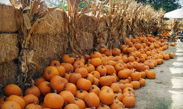Countryside Farms - Stockton: $12 for Farm Visit for Two Adults and Two Children with Hayrides and Kiddie Corn Maze at Countryside Farms ($24 Value)