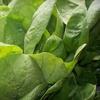 $10 for Farm-Fresh Produce in South Glastonbury