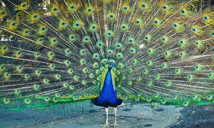 Folsom City Zoo Sanctuary - Folsom: $12 for Four Full-Day Admissions to the Folsom City Zoo Sanctuary (Up to $24 Value)