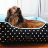 Polka Dots Couch Bed for Dogs