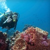 Up to 58% Off Scuba-Diving Classes
