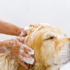 Up to 60% Off Self-Serve Dog Washing at Pet Valu
