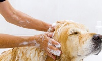 Grooming for a Small, Medium, Large or Extra Large Dog at Scruffy Chops (Up to 57% Off)