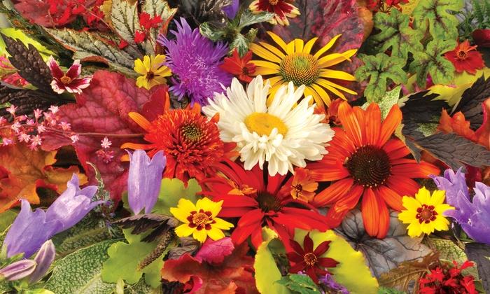 Romence Gardens & Greenhouse - NE Grand Rapids: $25 for $40 Worth of Plants at Romence Gardens & Greenhouses