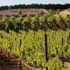 Half Off Wine Tasting at Frangipani Estate Winery