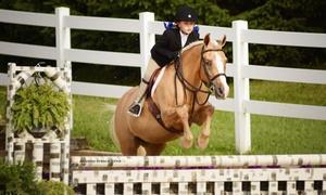 Platinum Farm Inc: One, Three, or Six 60-Minute Horseback-Riding Lessons at Platinum Farm Inc (Up to 55% Off)