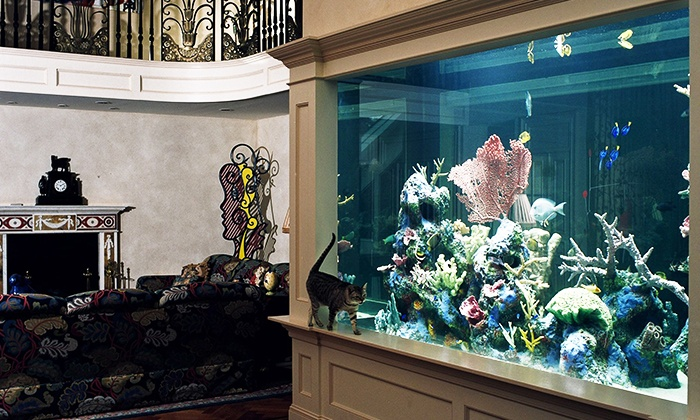 Aquarium Design International - Royal Palm Beach: Custom Design Consultation or a Maintenance Service from Aquarium Design International (Up to 58% Off)