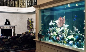 Aquarium Design International: Custom Design Consultation or a Maintenance Service from Aquarium Design International (Up to 60% Off)