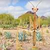 Desert Botanical Garden – Up to Half Off Admission or Plants