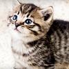 54% Off Pet-Sitting