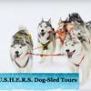 Half Off Outdoor Winter Activities or Dog-Sledding