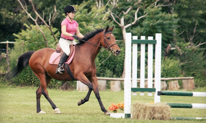 Spruce Meadow Farm - Clarence: One-Hour Riding and Horse-Grooming Lesson for One, Two, or Four at Spruce Meadow Farm in Clarence (Up to 71% Off)
