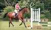 Up to 71% Off Horseback Riding in Clarence