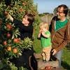 $10 for U-Pick Organic Apples in Watsonville