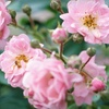 Up to 54% Off Shrub Planting or Landscape Consultation