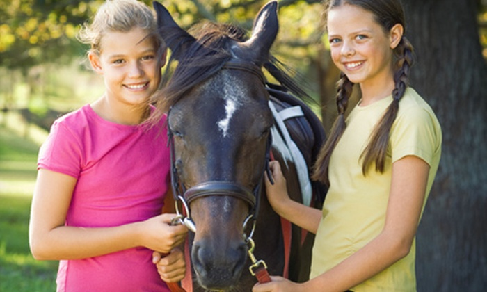 Jansal Saddlebreds LLC - Farmington: Two, Four, or Six Horse-Riding Lessons, or Birthday Party at Jansal Saddlebreds LLC in Mocksville (Up to 76% Off)