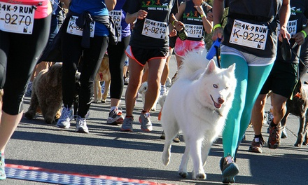 Furry 5K Run for One or Two Runners and Dogs on November 2 at 10 a.m. from The Animal Foundation (Up to 45% Off)