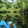 53% Off Mangrove-Tunnel Kayaking Tour in Placida