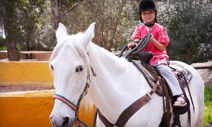 Hansen Performance Horses - Washington: One, Three, or Five Private Horseback-Riding Lessons at Hansen Performance Horses in Bowling Green (Half Off)