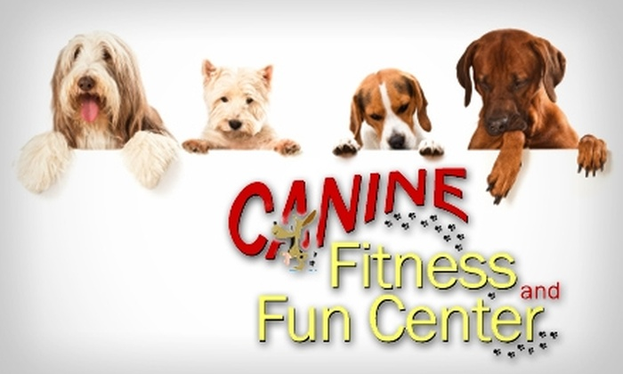 Canine Fitness and Fun Center - Washington Virginia Vale: $12 for One Day of Doggie Daycare from Canine Fitness and Fun Center (Up to $25 Value)
