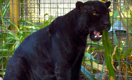 General Admission for 2 (a $12 value) - Florida International Teaching Zoo in Bushnell