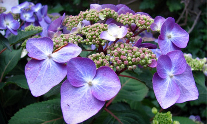 Neuhouser Garden & Gifts and Neuhouser Nursery - Multiple Locations: $20 for $40 Worth of Holiday Garlands, Decorations, or Plants at Neuhouser Garden & Gifts or Neuhouser Nursery