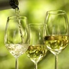 51% Off Wine Tasting from Wines for Humanity