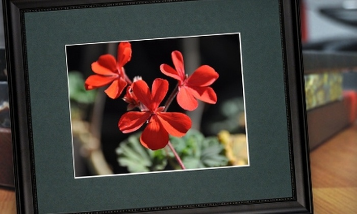 """PointClickPrint: $67 for One 11""""x14"""" Print Professionally Matted and Framed to 16""""x20"""" from PointClickPrint ($143.46 Value)"""