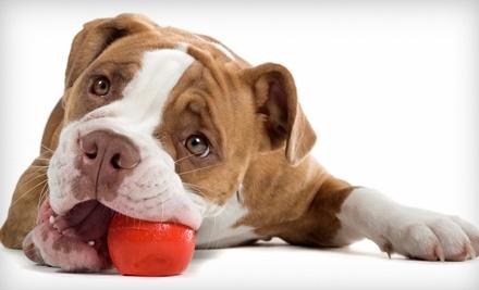 Dog Training at Your Door: 3 Dog Training Sessions - Dog Training at Your Door in