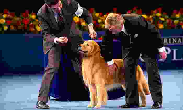 The National Dog Show - Upper Providence: The National Dog Show for Two or Four on November 18 at Greater Philadelphia Expo Center at Oaks (Up to 50% Off)