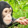 Up to 51% Off Primate Sanctuary Visit for Four in Palm Harbor