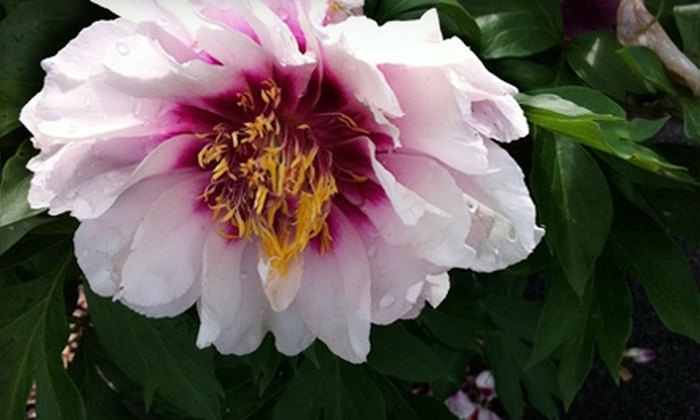Bloomer's Home & Garden Center - Sewell: $20 for $40 Worth of Plants, Flowers, and Garden Supplies at Bloomer's Home & Garden Center in Sewell